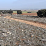 Avanza la fase de diagnóstico del estado de conservación de la Cañada Real Conquense